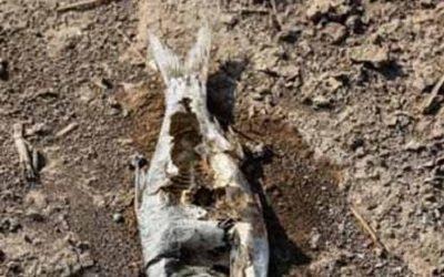 Fish Farming Complex Tragedy in Southern Iran