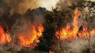Forest Fires Expanding Due to Officials Neglect